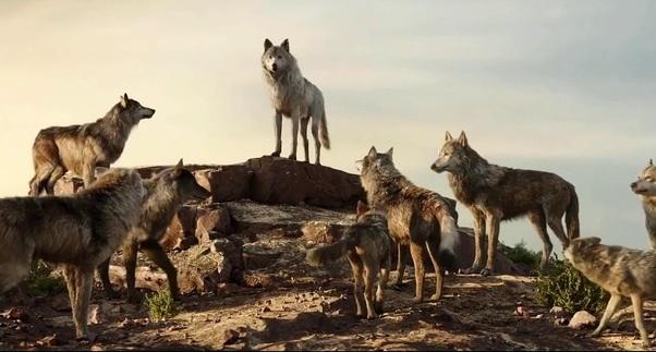 wolf-pack.jpeg